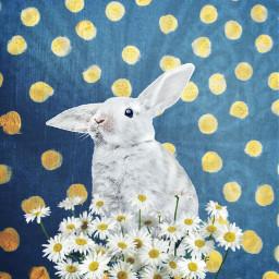 freetoedit blue bunny remixmechallange cute