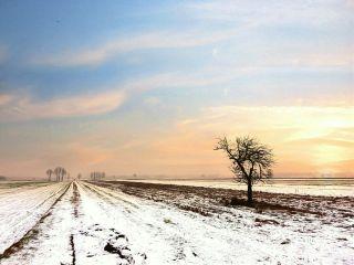 tree landscape heaven sun freetoedit
