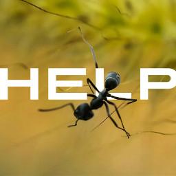 macrophotography animal ant addtext macro