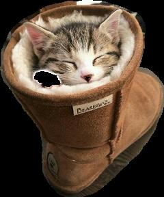 freetoedit cat katze sticker
