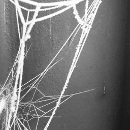 freetoedit blackandwhite spiderwebs frosted photography