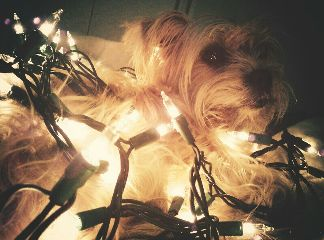dog lights fluffy molly string