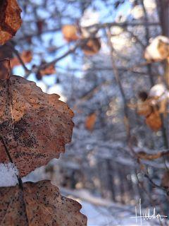 leafes nature naturephotography lapland selectivefocus