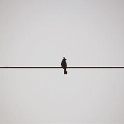 blackandwhite bird freetoedit