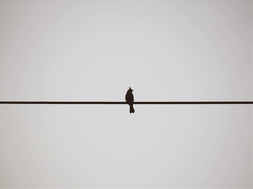 #blackandwhite #bird #FreeToEdit