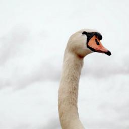 cute nature photography petsandanimals winter