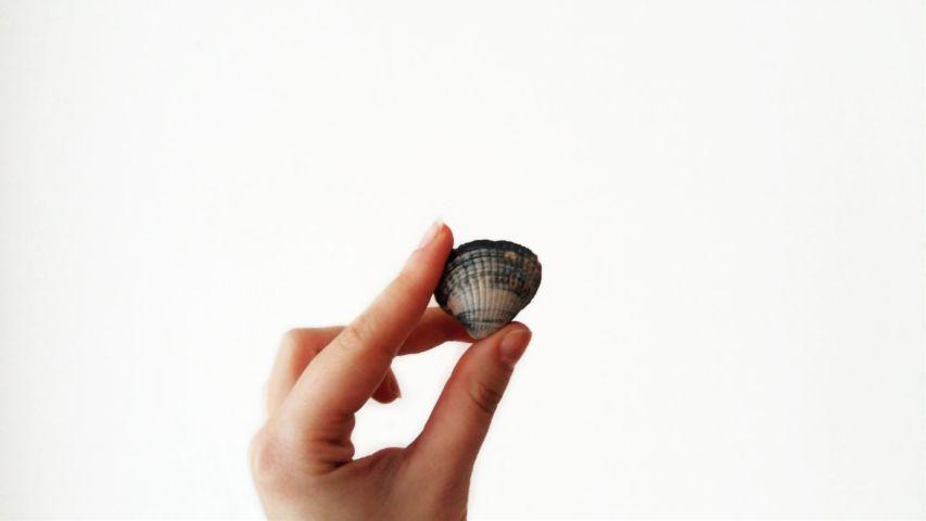 photography minimalism minimalist shell hand