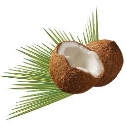 freetoedit coconut torte
