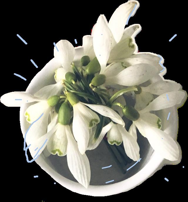 #FreeToEdit #flower #simple #ftestickers