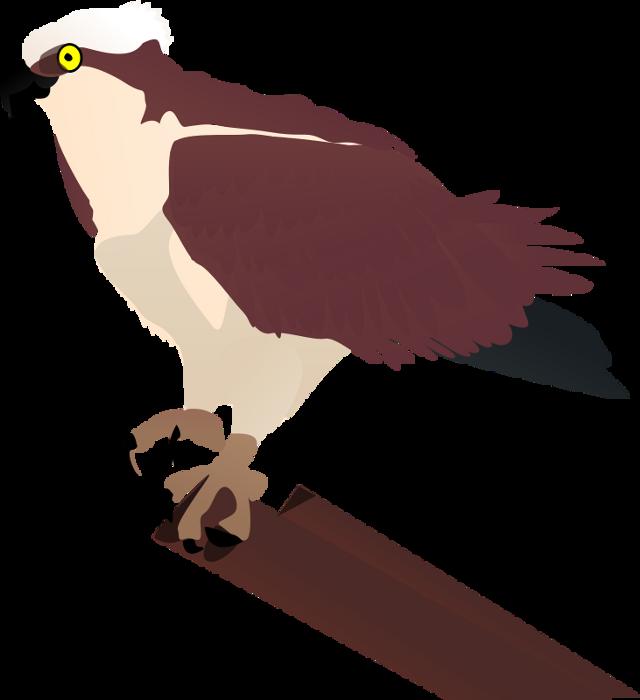 #ftestickers #bird #FreeToEdit
