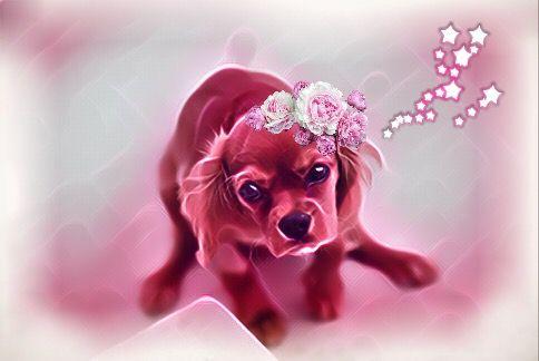 puppyday freetoedit pink