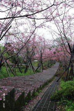 taiwan freetoedit