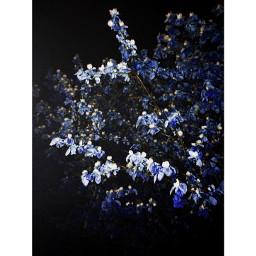 blueffect art nature