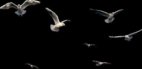 birdizq