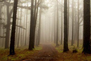 forest fog nature landscape freetoedit