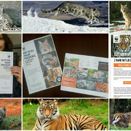 me charity wwf tiger whitepanther freetoedit